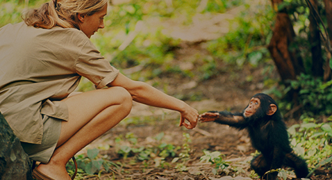 Still image of Jane Goodall interacting with a baby gorilla from the film Jane.