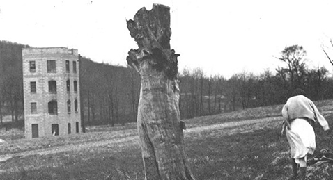 Still image of a women walking though a field with a dead tree near by from the film You Are Not I.