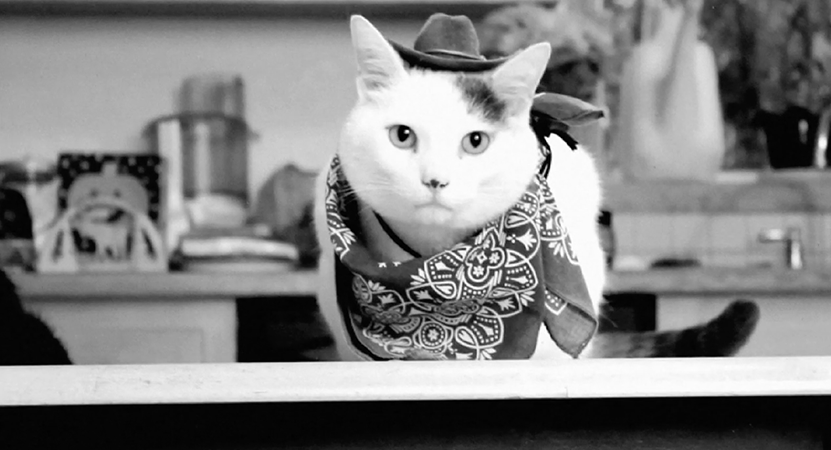 Image of a cat in a bandana from Cat Video Fest.