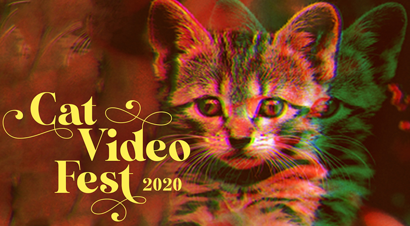 Still image from CatVideoFest 2020.