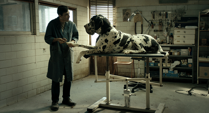 a man examines a large dog from the film Dogman.