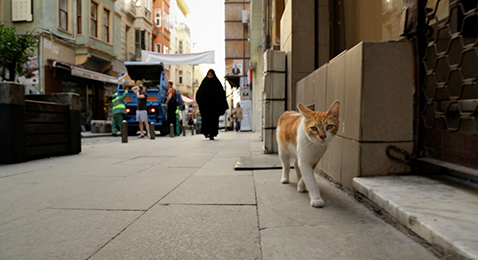Still image from Kedi.