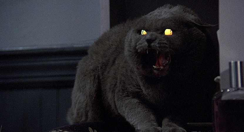 and angry cat from the film Pet Sematary