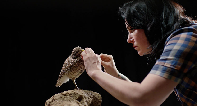 A woman works on a taxidermied bird from the film Stuffed.