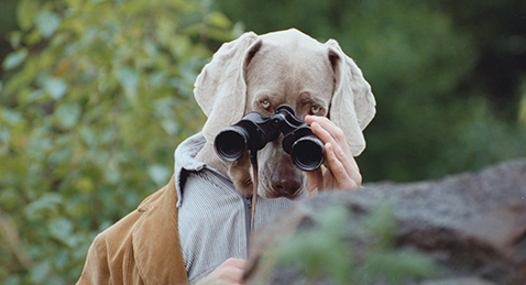 Still image from The World of William Wegman.