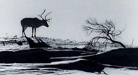Still image from Valkoinen Peura.